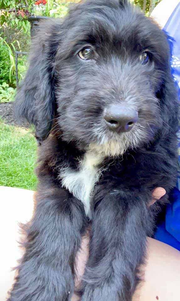 Vibrant Puppy • Vibrant People of Elkhart County